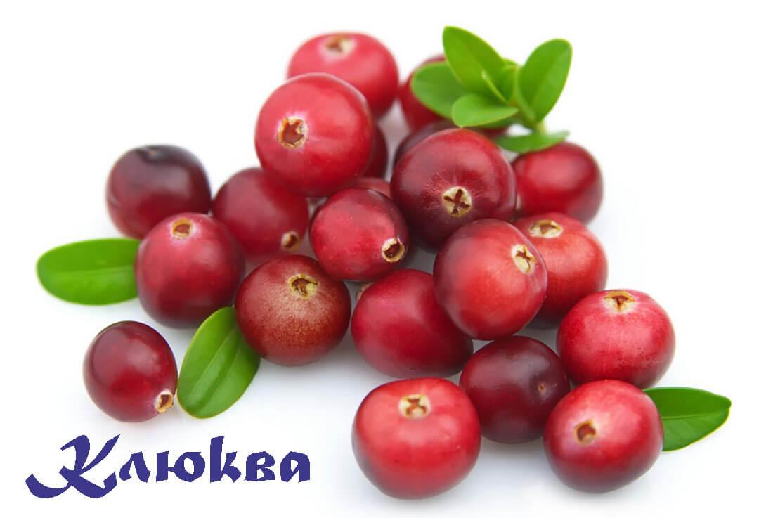 болотная ягода клюква