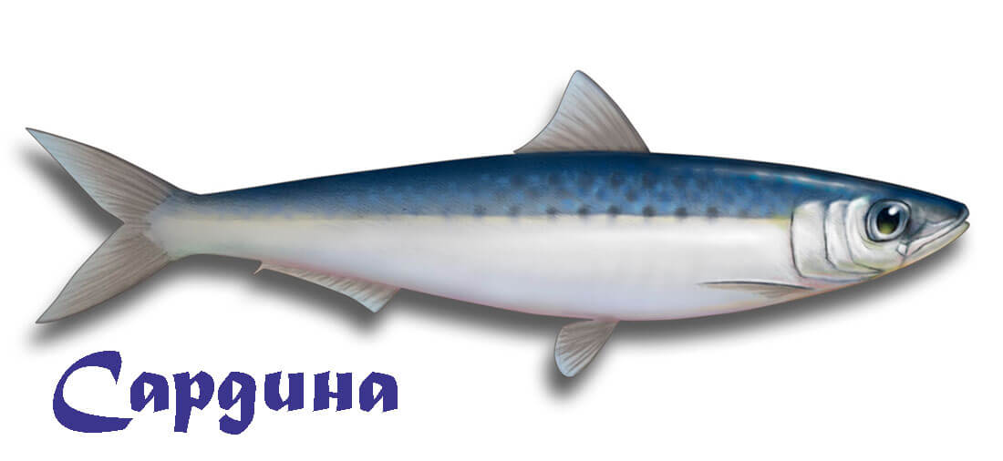 жирная рыба источник омега-3 жирных кислот