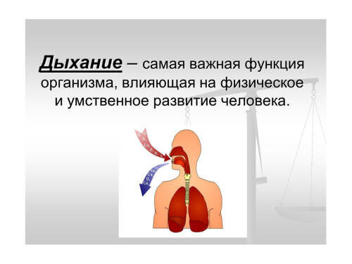Важная функция организма человека - дыхание